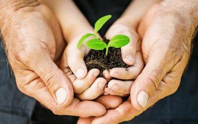 Creating a Pathway toward Renewal: the Healing Garden